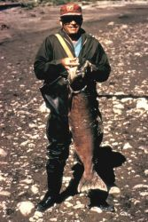 Fisherman with King Salmon Photo