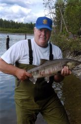 Alexander Creek Chum Salmon Photo