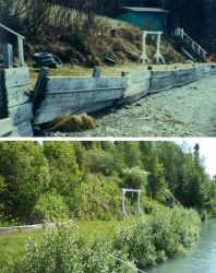 Habitat Restoration Along the Kenai River Photo