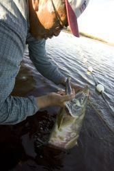 Subsistence fishing on the Koyukuk river in Kanuti NWR Photo