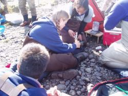 Steller's Eider Banding at Izembek National Wildlife Refuge Photo
