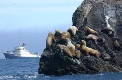 MV Tiglax and Steller Sea lions in the Aleutian Islands Photo