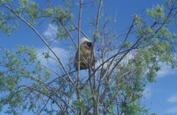 Porcupine in Tree Photo