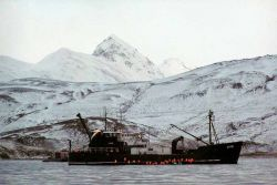M/V Selendang Ayu Oil Spill Unalaska 2004 Photo