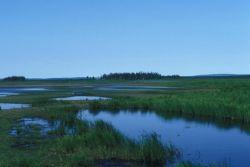 Innoko Wilderness Area in Summer Photo