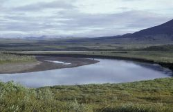 Sheenjek River in Summer Photo
