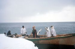 Walrus Hunters In Skin Boat Photo