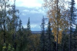 Spruce Forest and Kenai Mountains Photo