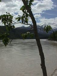 Cottonwood On Copper River Photo