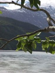 Cottonwood On Shore Of Copper River Photo
