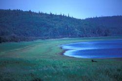 Innoko River Black Bear Photo