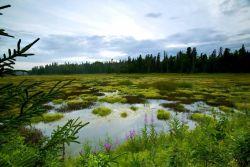Kenai Refuge Wetlands Photo