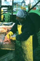 Woman Processing Salmon in Kaltag Photo