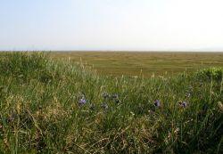 1002 Area: view across coastal plain tundra Photo