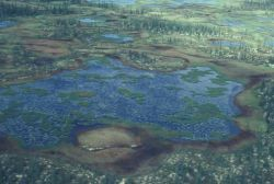 Bog Lakes and Recent Forest Burn Photo