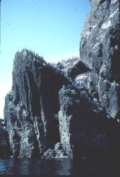 St. Matthew Island seabird colony Photo