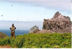 Bogoslof Island, looking East Photo