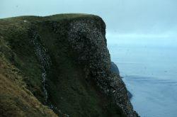 St. George, Pribilof Islands, High Bluffs Photo