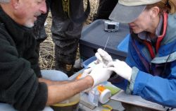 Avian Influenza Sampling Photo