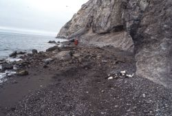 Cape Lisburne, pile of murres and kittiwakes killed by landslide Photo