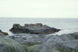 Walrus Island, Murre Rock in the Bering Sea Photo