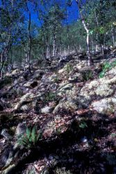 Innoko Refuge Hillside Vegetation Photo