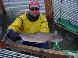 Broad Whitefish at Whitefish Lake Weir Photo