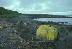 Adak Island, Lichen covered rock on beach Photo