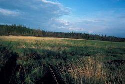 Wetland Bog along Huslia River Photo