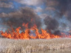 Marsh burn at Tule Lake NWR 2005. Photo