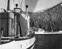Southeast Alaska Deer Trapping Operation Photo