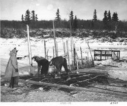 Constructing Fish Trap on Yukon River Photo
