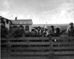 Children at Reindeer Roundup on Nunivak Photo