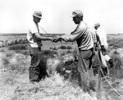FWS2124 Waterfowl Survey (1951) Photo