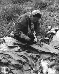 Nunivak Woman Filleting Fish on Nunivak Island Photo