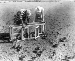 FWS2135 Waterfowl Survey Photo