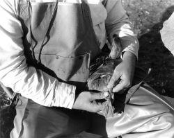 FWS2189 Waterfowl Survey Photo