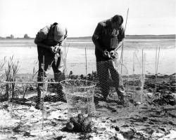 FWS3901 Waterfowl Survey (1957) Photo