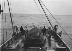 Fishing, Bering Sea Photo