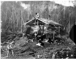 Cabin on the Yukon Flats Photo
