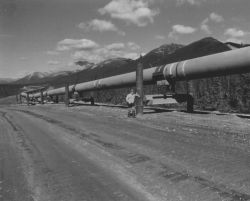 Man Standing Next to Trans-Alaska Pipeline Photo