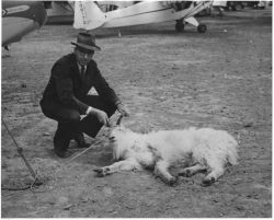 Edward Chatelain and Mountain Goat Photo