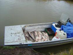 Subsistence catch at Whitefish Lake Photo