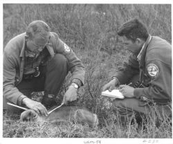 Biologists and Caribou Calf Photo