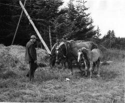 Frank Beals with Work Horses on Kodiak Photo