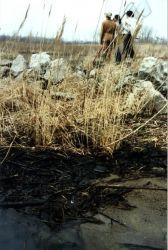 Detroit River Oil Spill Damage Photo