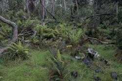 Hakalau Forest National Wildlife Refuge Photo
