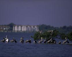 Pelican Island National Wildlife Refuge, Florida Photo