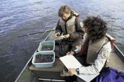 Mussels Research Photo