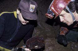 FWS Employees Exploring for Blind Cave Crawfish. Photo